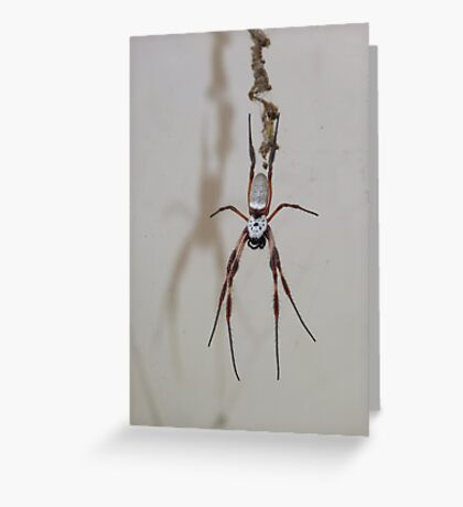 Welcome from the Orb Weaver Greeting Card