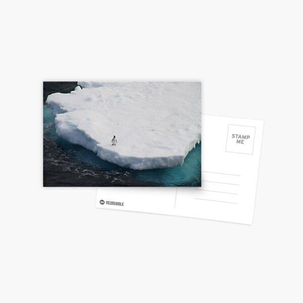 The Lone Penguin Postcard