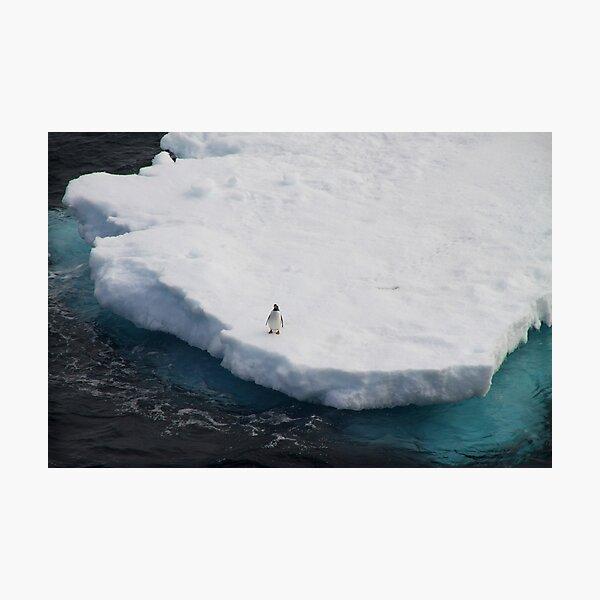 The Lone Penguin Photographic Print