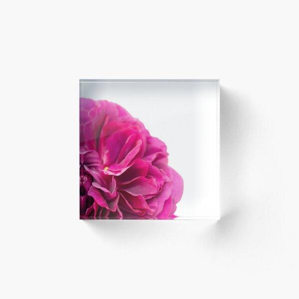 English Rose 'The Dark Lady' Acrylic Block