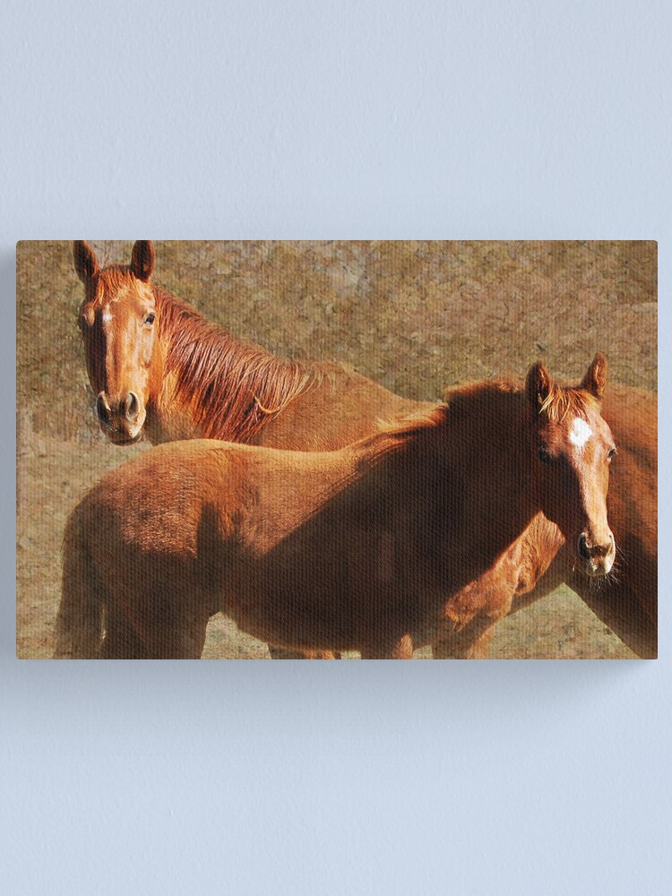 Alternate view of Mare & Colt Canvas Print
