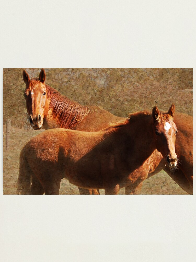 Alternate view of Mare & Colt Photographic Print