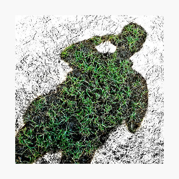 Grassman - Positive Sighting Photographic Print