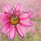 Spider on flower by Lifeware