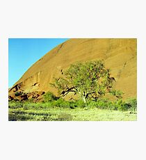 Uluru Tree Photographic Print