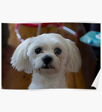 My Dog Moo Moo Poster