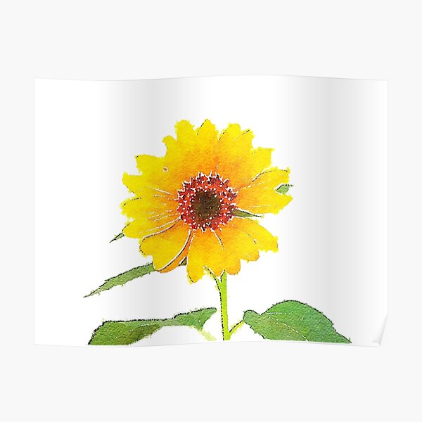 Sunflower in Watercolor Poster