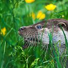 Otter by Elaine123