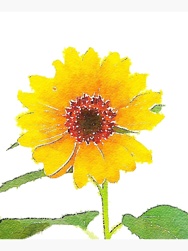 Sunflower in Watercolor by douglasewelch