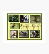 Photo collage of Songbirds Art Print
