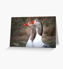 Geese twins....? Greeting Card