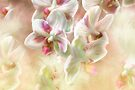 Orchid Dance  by Elaine Manley