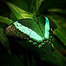 Papilio Palinurus by Elisabeth van Eyken