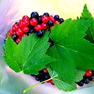 Red and black currants by ©The Creative  Minds