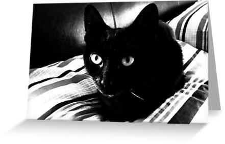 Black Beauty by Ladymoose