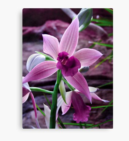 Orchid Collection - 8 Canvas Print