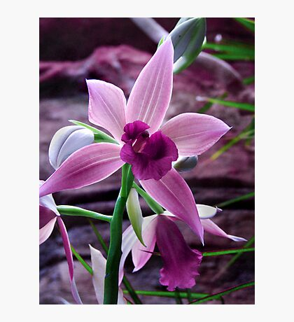 Orchid Collection - 8 Photographic Print
