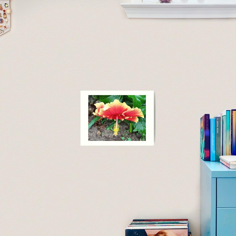 Hibiscus Beauty Art Print