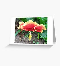 Hibiscus Beauty Greeting Card