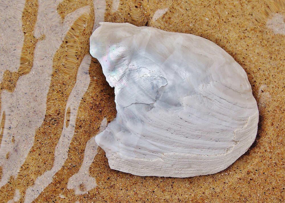Jagged White Shell by Kathilee