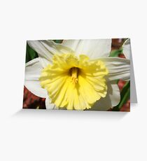 Daffodil in Bloom Greeting Card