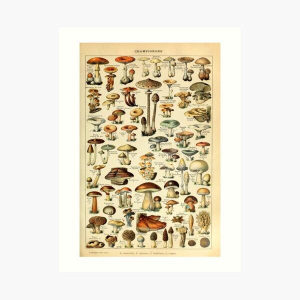 Magical Mushrooms Art Print
