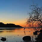 Heron Sunset by Leon Heyns