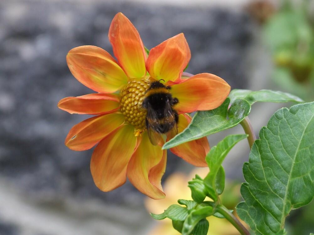 Bumble Bee - Christchurch, NZ by BreeDanielle