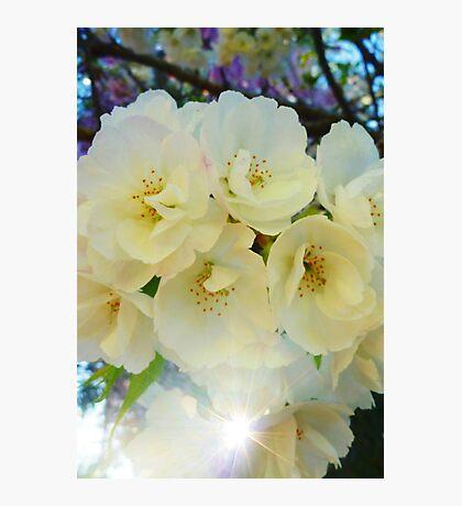 Sun Blossom Photographic Print