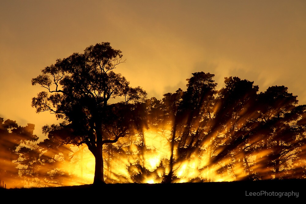 ~ Blaze ~ by LeeoPhotography