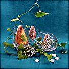 Four seashells by andreisky
