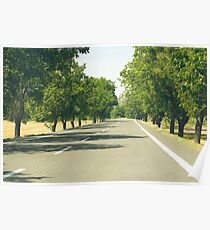 Tree Lined Asphalt Road Poster