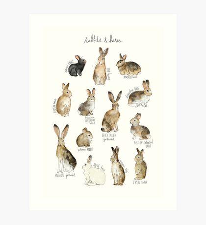 Rabbits & Hares Art Print