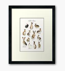 Rabbits & Hares Framed Print