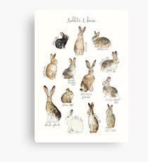 Lienzo metálico Conejos y liebres