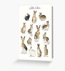 Rabbits & Hares Greeting Card