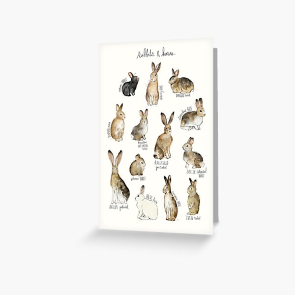 Rabbits & Hares Greeting Card