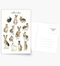 Kaninchen und Hasen Postkarten