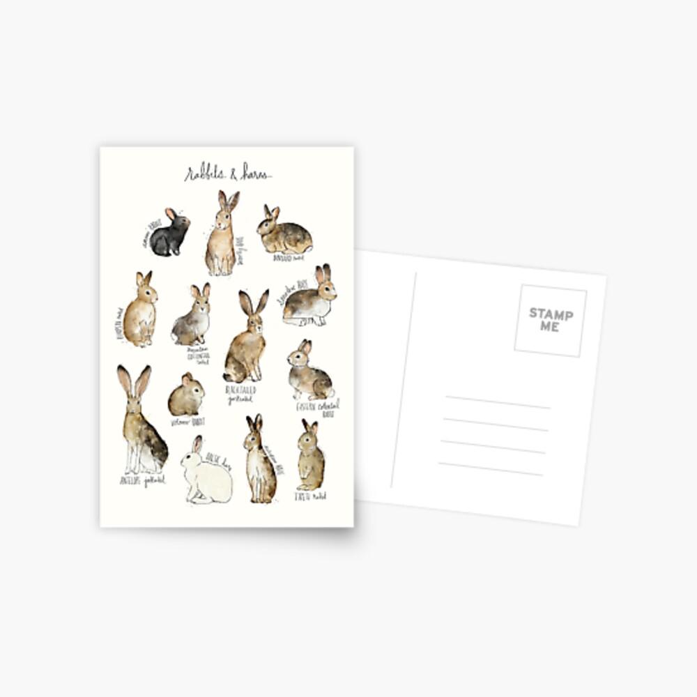 Conejos y Liebres Postal
