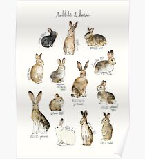 Rabbits & Hares Poster
