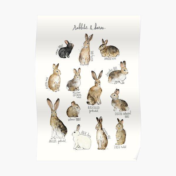 Conejos y Liebres Póster