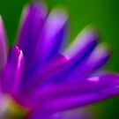 Purple Bokeh by EventHorizon