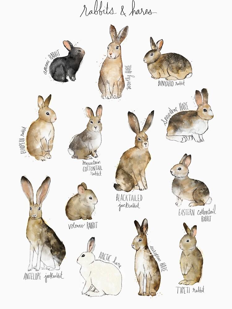 Rabbits & Hares by AmyHamilton
