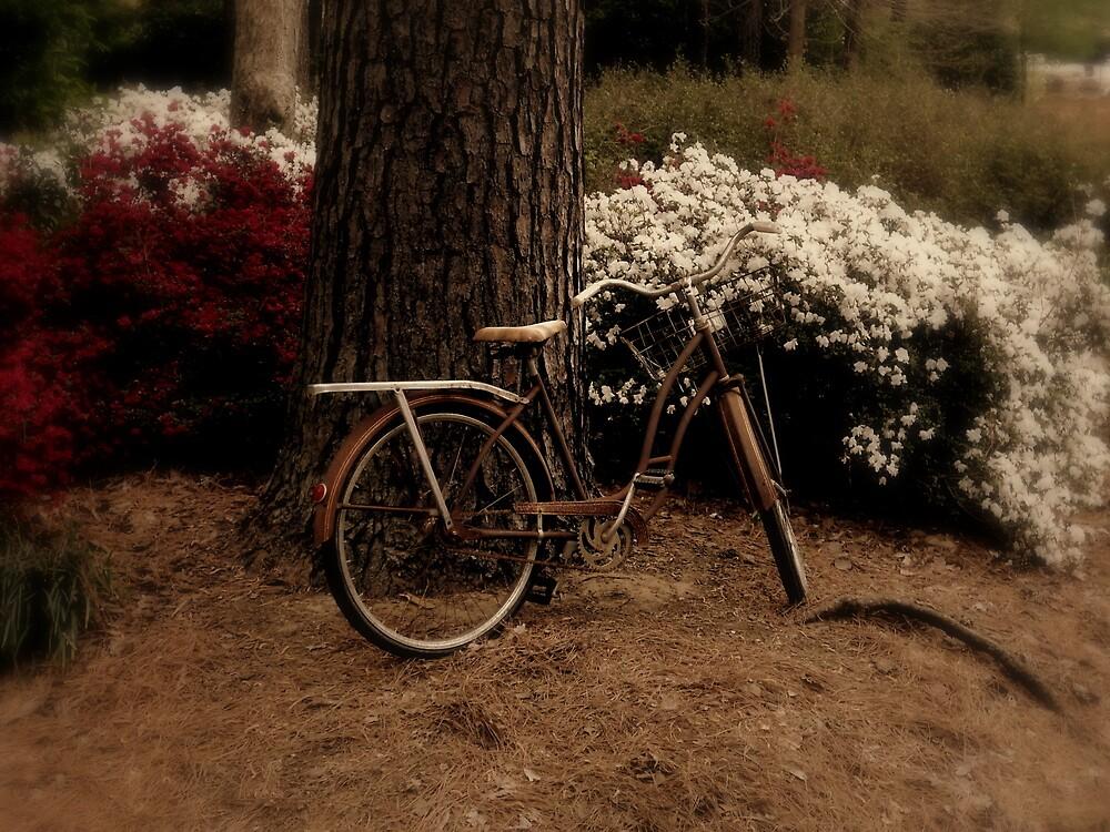 A Place to Park by Dawn di Donato