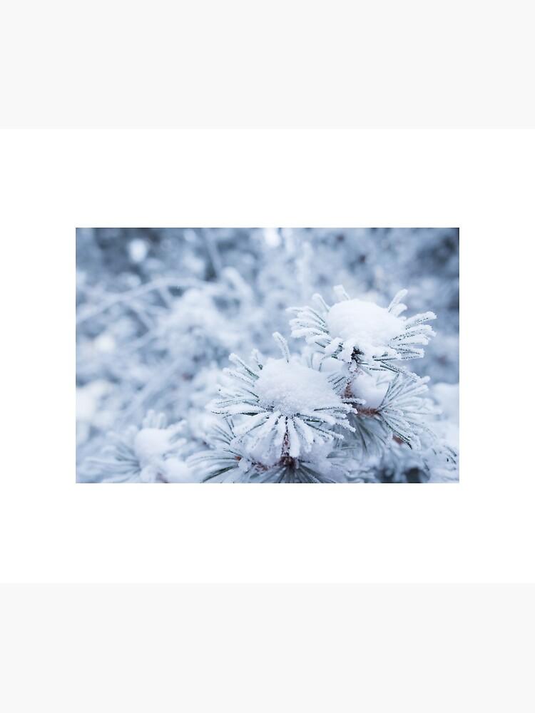 Hoarfrost on conifer tree needles by Juhku