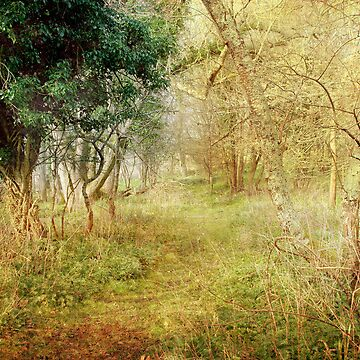 The Woodland Walk by CatherineV