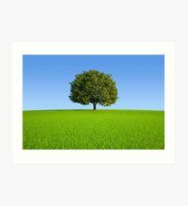 Single tree on hill  Art Print