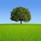Single tree on hill  by jordygraph