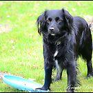 This is my frisbee by BrightBrownEyes