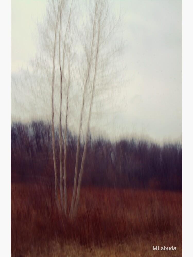Lone Birch  by MLabuda